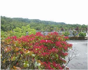 川西大霊苑を彩る花木