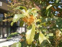 川西大霊苑内の『金木犀』