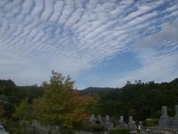 秋の空・・・・うろこ雲