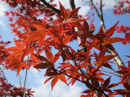 紅葉が始まりました