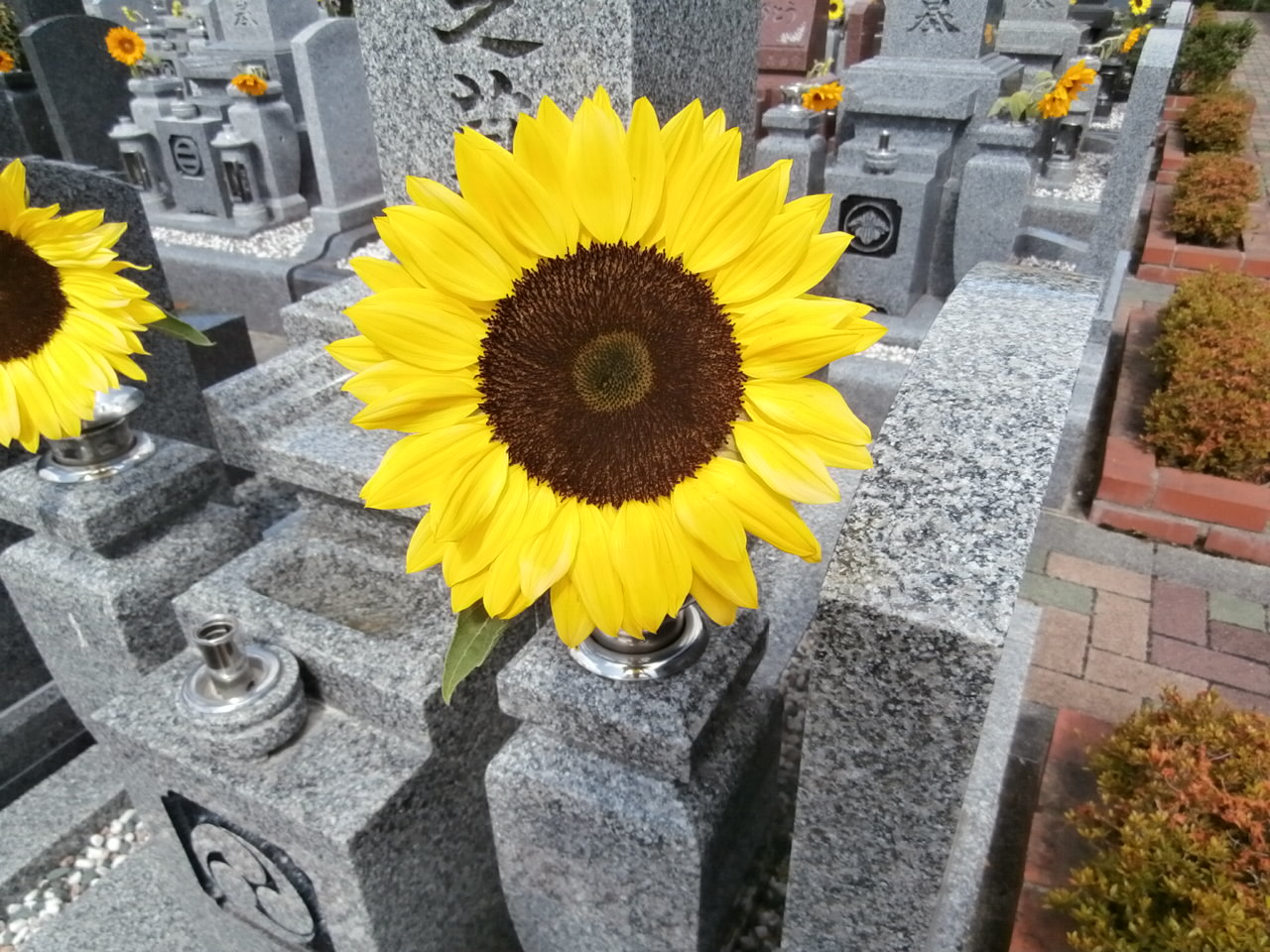 川西大霊苑 父の日 ひまわり献花サービス